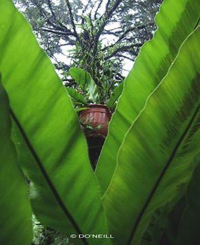 Nesting saga of Peaceful Dove: Part 1 of 6