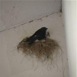 House Swift strange behaviour