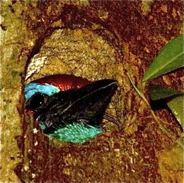 A snake and a barbet in a hole…