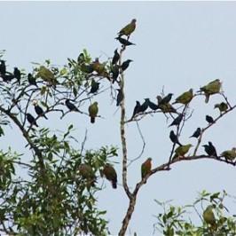 Flight reaction of roosting birds