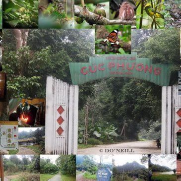 © Monitoring White's Thrush at Cuc Phuong NPark N. Vietnam (Part 1)