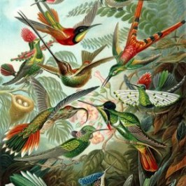 """Photographing"" Birds, the Early Days: ""Pioneer"" Bird Artists"