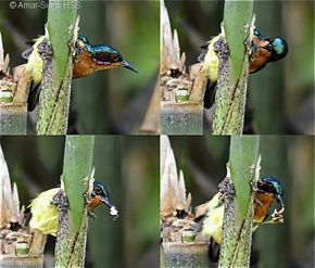Of Bird Watching, Bird Photography and the Like