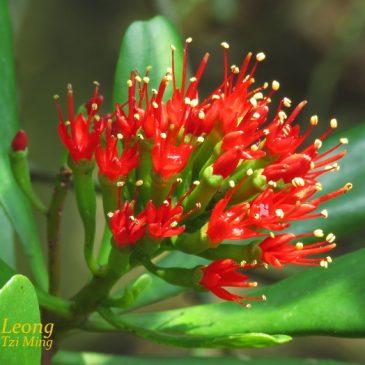 Teruntum Merah visited by Birds