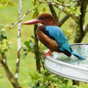 What you can do to your garden to bring in more birds – updated