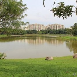 Bird-plant relationships at Singapore's Punggol Park