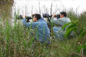 Birding in Singapore and the challenges of the 21st century