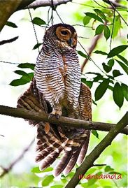 Do owls preen and stretch during the day or night?