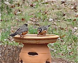 Setting Up the Ideal Garden: Garden Birdbaths to Feeders