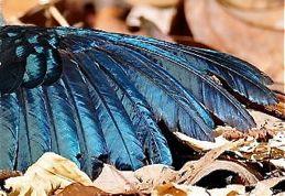Feather damage in birds