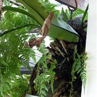 Nesting saga of Peaceful Doves: Part 6 of 6