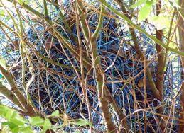 Clothes hanger nest - courtesy of Badaunt