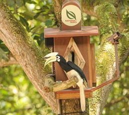 Sudden increase in Singapore's hornbill population