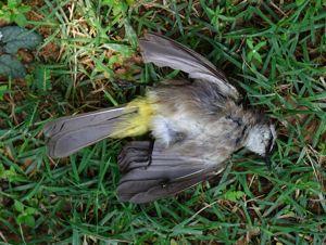 Where do birds go when they die? – Bird Ecology Study Group