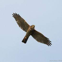 Birds of Sungei Balang, Peninsular Malaysia