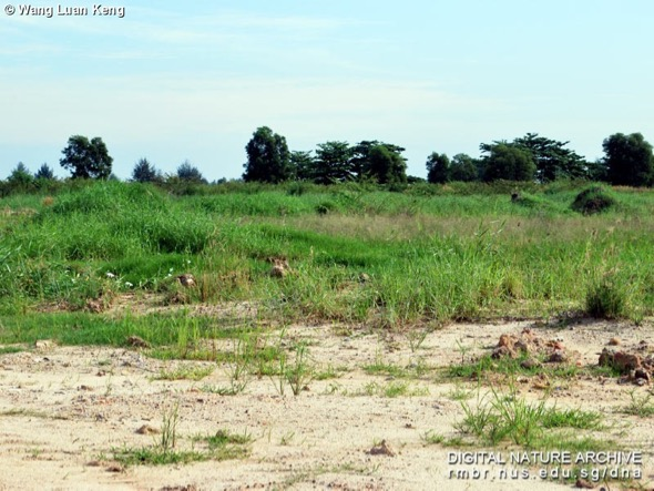 Plant growth on reclaimed land (Photo credit: Wang Luan Keng)