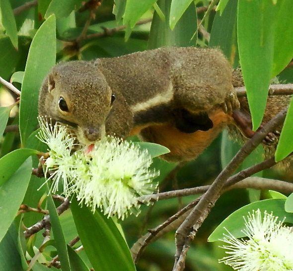 Up squirrel scene