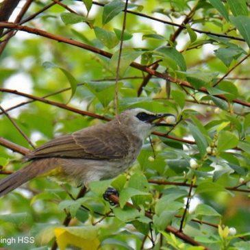 Birds feeding on fruits…