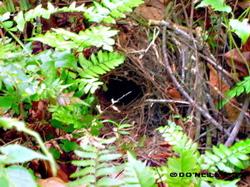 image-b-bwpittas-nest.jpg