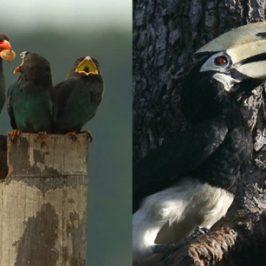 Birds and molluscs