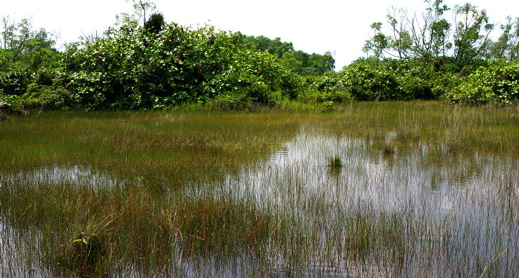 Tuas: Another wetland reclaimed
