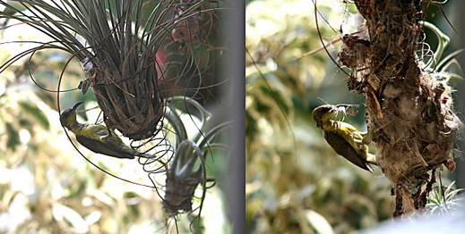 What caused two nesting failures on the same plant?