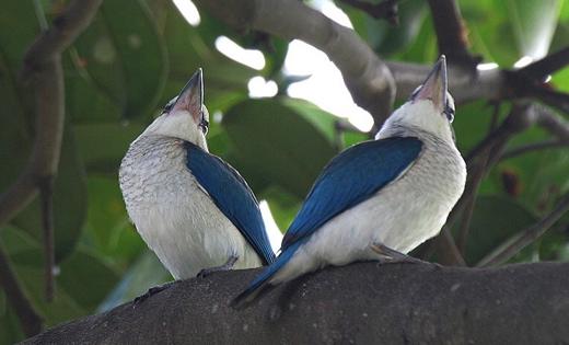 ckingfisher-jv-eddy-lee.jpg