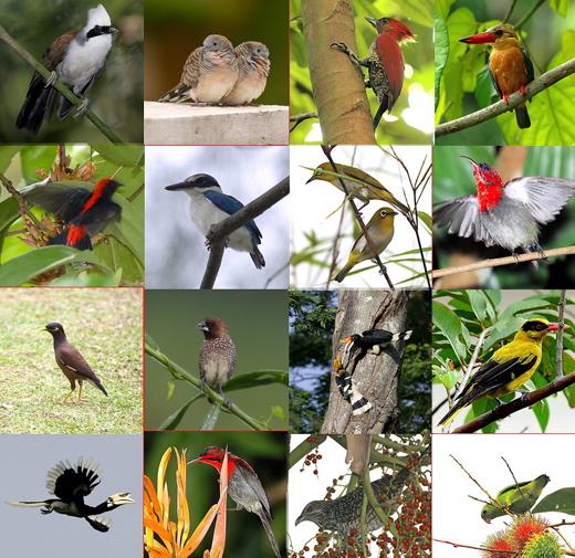 A celebration of birds