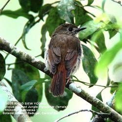 6-flycatcherful-ch-bg.jpg