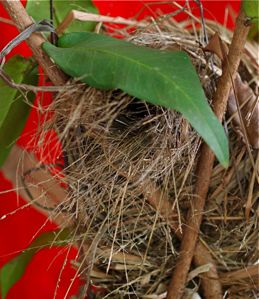Anatomy of a munia's nest