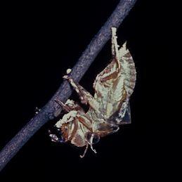 cicada-cast-0183-2.jpg