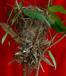 Anatomy of a munia's nest