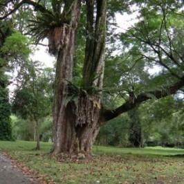 Bidadari Cemetery, a new birding playground