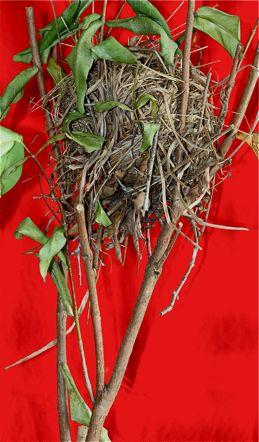 Anatomy of a munia's nest II