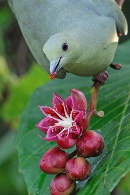 Birds and <em>Dillenia suffruticosa</em>