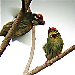 Avian Kama & Sutrajee