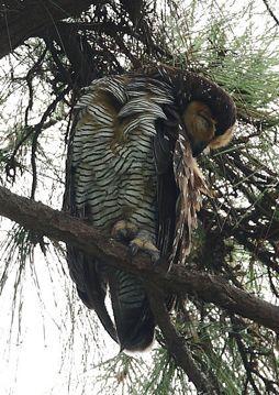 27 owl2