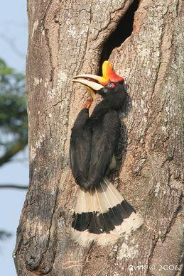 More on hornbills locking bills