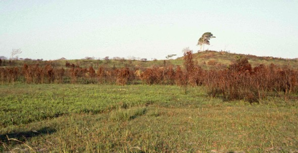 Grassland as a result of regular fires (Photo credit: YC Wee)