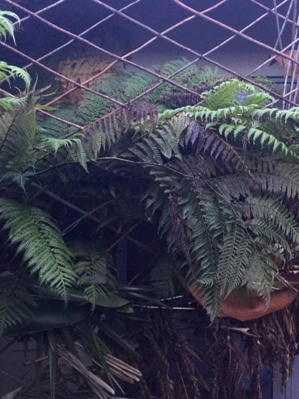 SunbirdOB-nesting [JudyRaft]