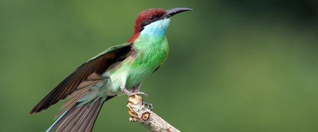 The Birds of Singapore – an online book