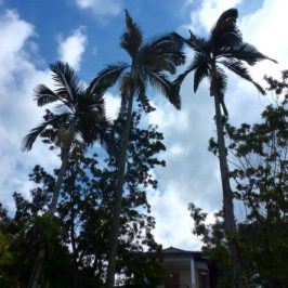 Alexandra Palms gone but memories of birds remain