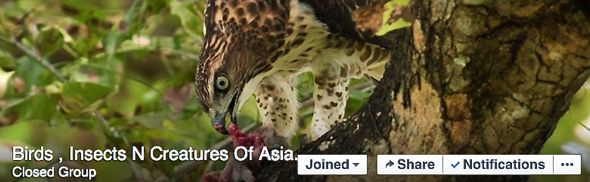 "BESG working closely with Facebook ""Birds, Insects N Creatures Of Asia"""