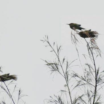 Birds bathing in the rain
