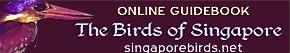 The Birds of Singapore… in progress…