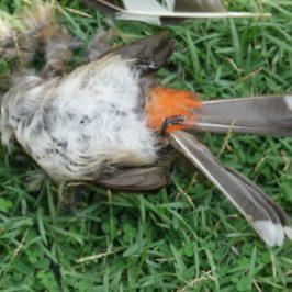 What happens when a bird dies