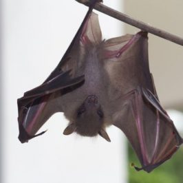Bats in my porch: 23. A juvenile fell from the roost