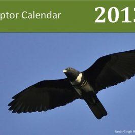 Raptor Calendar 2013