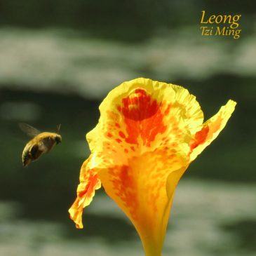 DARING DANCE OF A BOLD BEE