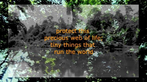 """Still from """"Unseen Undergrowth"""". Script by Teresa Teo Guttensohn, footage by Kwan Hun."""